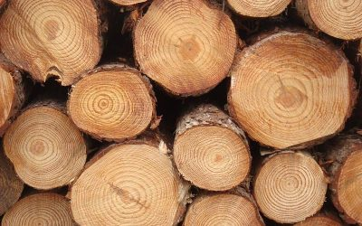 Cost-productivity analysis of South African pine sawtimber mechanised cut-to-length harvesting